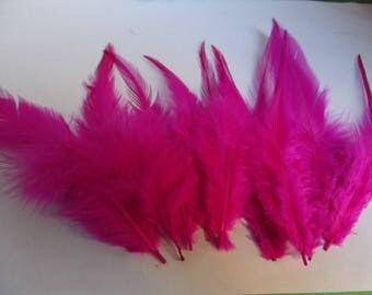 Rooster colors Fuchsia 10 to 14 cm height 20 feathers