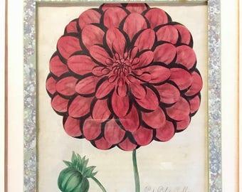 Antique English Botanical Colored Engraving Dahlia