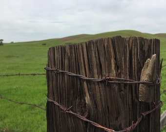 fence post livenomore
