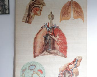 Vintage Medical Poster - Lungs Poster - Respiratory Poster
