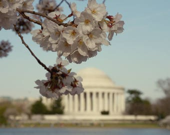 Washington DC art Cherry Blossom Thomas Jefferson Memorial photo, washington dc photography print, dc art print, DC poster print, wall print