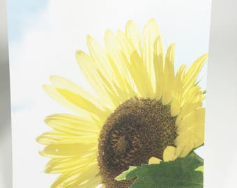 Small Blank Note Cards, SunFlowers, Flowers