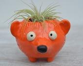 Silas the Orange Hedgehog Planter for Air Plants