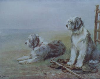 Antique Dog Print - Two Old ENGLISH SHEEPDOGS sitting resting by a Shepherd's Crook - Wm Luker Jnr - Matted - Ready to Frame