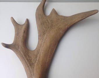 Elk Antler Vintage