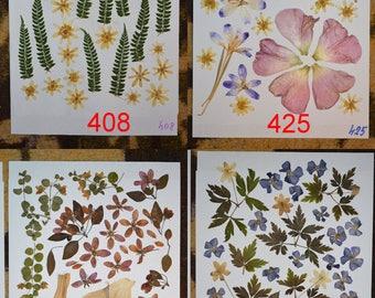 Pressed flowers / oshibana assortment - Dried Pressed Fern Leafs, Real Green Fern Leafs, Pressed Fern. pressed foliage.  #408 #425 #442 #477