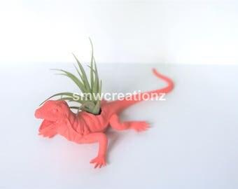Custom Lizard Planter with Air Plant Included Room Decor- Dorm Room Decor