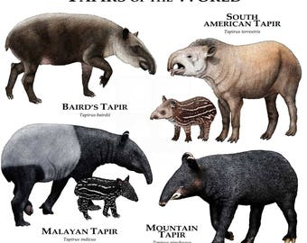Tapirs the World