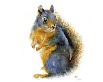 Squirrel watercolor painting - print. Animal Illustration. Douglas Squirrel