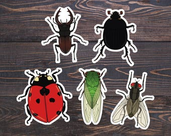 Entomology Stickers - Insect Sticker - Insects Art - Biology Stickers/Science Nature Lover Gift - Fly/Cicada/Dung/Stag Beetle/Lady Bug Vinyl