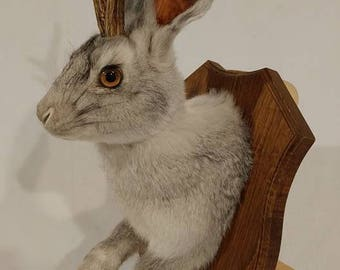 Taxidermy Jackalope grey