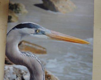 The Blue Heron Canvas Photograph