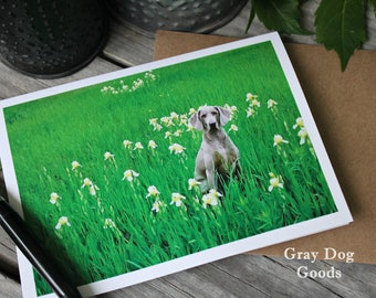 Weimaraner Card, Dog Photography, Dog Greeting Card, Dog in Lilies