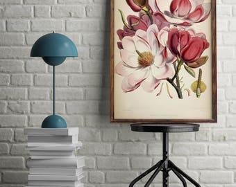 Botanical print - Pink Magnolia print - Vintage magnolia - Vintage botanical magnolia - Invitations - Decoupage - Wall Art Prints