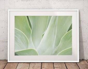 Agave botanical print plant photography, botanical art, green decor nature art prints botanical decor large wall print botanical download