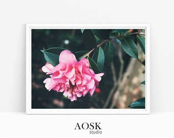 Pink Blooming Flower Photography, Flower Printable Art, Floral Photography, Pink Floral, Gift for Her, Wall Art, Botanical Photography