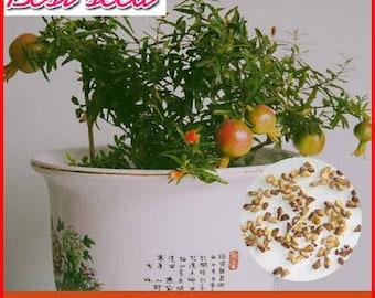 20pcs Pomegranate seeds, Delicious sweet fruit bonsai tree seed