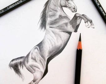 HORSE REARING PENCIL Drawing - on high quality paper