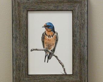 Watercolor Bird Art Print - Barn Swallow