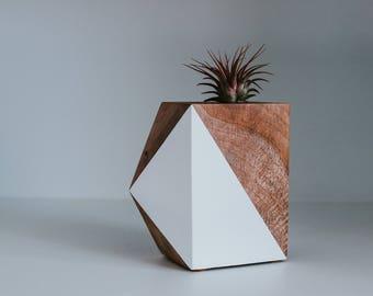 Mirabilia: Air Plant Sculpture