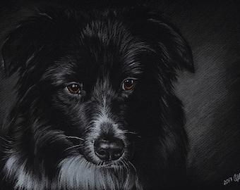 Border Collie. Pastel Portrait on colored paper.