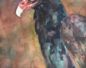 Watercolor of a Turkey Vulture