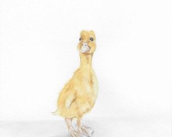 Duckling, 8x10