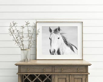White Horse Print, Horse Photography in Black and White, PHYSICAL PRINT