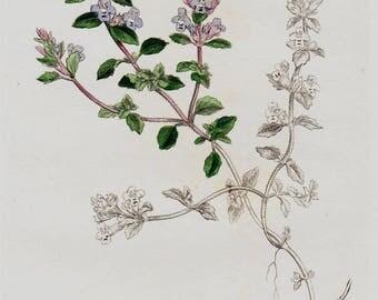 1798 Antique BOTANICAL Print, Handcolored  flower print, Acinos,  Original Antique FLOWER Print of Wild Flowers. Antique Print