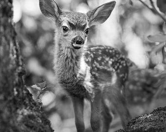 FAWN PHOTO, Baby Animal Black and White Photograph, Woodland Nursery Art, Deer, Safari Nursery Decor, Kids Room Decor, Woodland Baby Shower