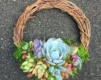 """6"""" Living Succulent Wreath (Made-to-Order)"""