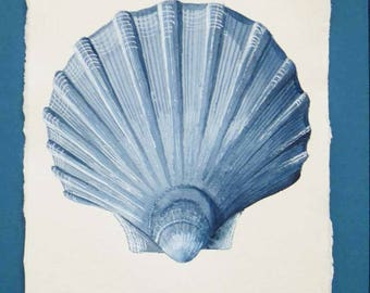 Original watercolour scallop clam shell painting in indigo blues illustration from a series ocean collection beach style coastal decor