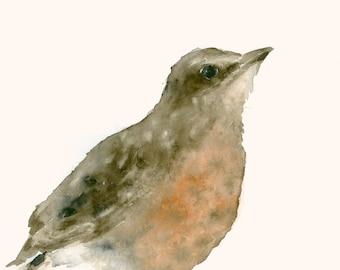 Original Watercolor Painting Baby Robin