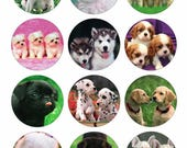 Puppies / Puppy Dogs Printable 1 Inch Circles / Bottlecap Images / Digital Collage / Instant Download / Cute Adorable Pug Lab Husky etc
