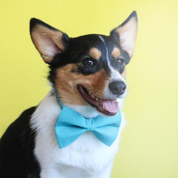 Teal Polka Dot Dog Bow Tie