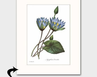 Water Lily Art w/Mat (Antique Botanical Wall Decor, Blue Nursery Gift, Lotus Illustration) Matted Redoute Flower Print