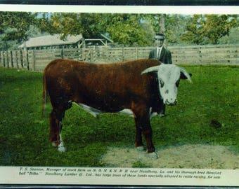 Antique Bilbo Hereford Bull Unused Postcard