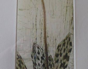 ELIZABETH BLACKADDER. Original Signed Etching Printed in Colours: Orchid Paphiopedilum