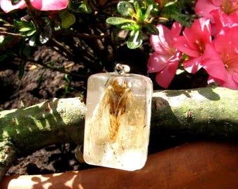 Natural Pedant - moth in resin