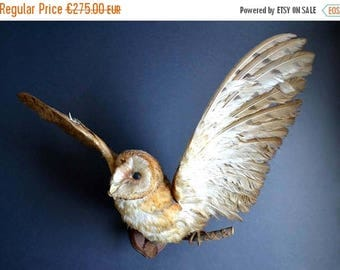 25% SALE Vintage Adult Barn Owl Taxidermy Stuffed Trophy Bird French Wall Mount Country House Curiosity