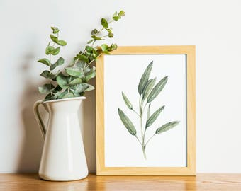 Sage - sage painting - herb painting - farmhouse - Sage watercolor - home decor painting - kitchen art - dining room art - food art - herbs