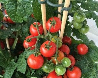 Heirloom tomatoes seeds (Rutgers )