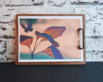 Cute gift for friend, Butterfly nature print in peach and teal, First wedding anniversary gift,  Nature lovers gift, Home decor print ideas,