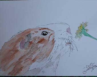 """drawing painting watercolor and ink """"pig Turkey"""""""