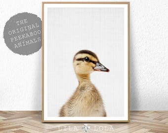 Nursery Art, Duckling Print, Baby Animal Wall Art, Duckling Photo, Nursery Decor, Nursery Printable, Printable Baby Duckling, Animal Art