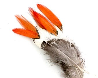 3-5 Inch Golden Pheasant Feathers (10) Orange Tipped Feathers. Red Tipped Pheasant Neck Feathers. Red Bird Feathers. Short Feathers