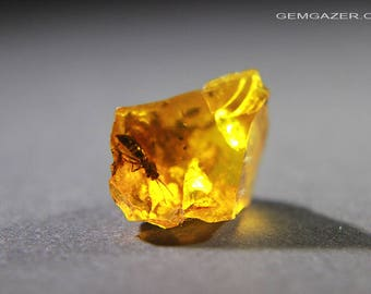 Amber specimen with Wood Gnat insect inclusion, Dominican Republic.  4.08 carats / 0.82 gram.