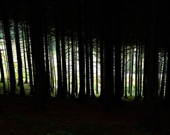 Forest Silhouette photo print A4 with white border 'Macclesfield Forest'