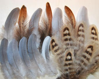 F38 - Set of natural feathers of pheasants/Pigeon - 20plumes-7/10cms - (F38)