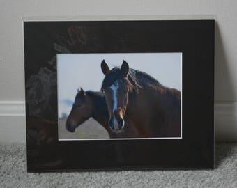 Bay Horses Print - Black